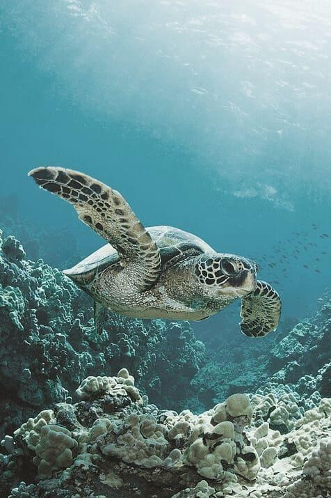 Cuurate - Baa Atoll