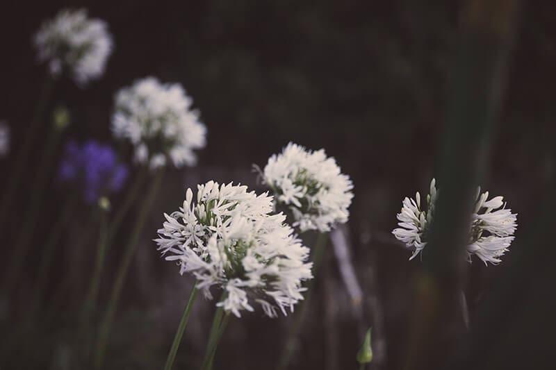 Cuurate - Flora & Fauna