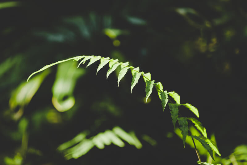 Cuurate - Royal Botanical Garden