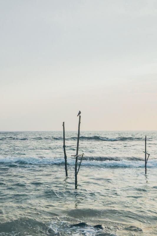 Cuurate - Stilt Fisherman