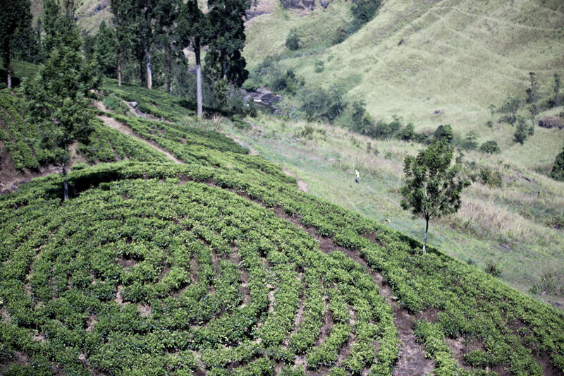 Cuurate Hills